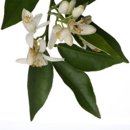 APOTHECARY Spray do aromaterapii NEROLI